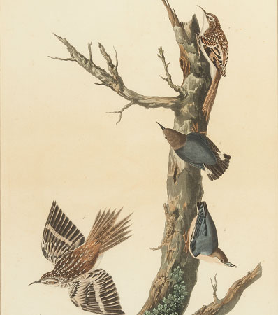 John James Audubon. [Robert Havell, engraver]. Original Copper Printing Plate