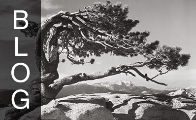 Jeffrey Pine, Sentinel Dome, Yosemite National Park, 1940