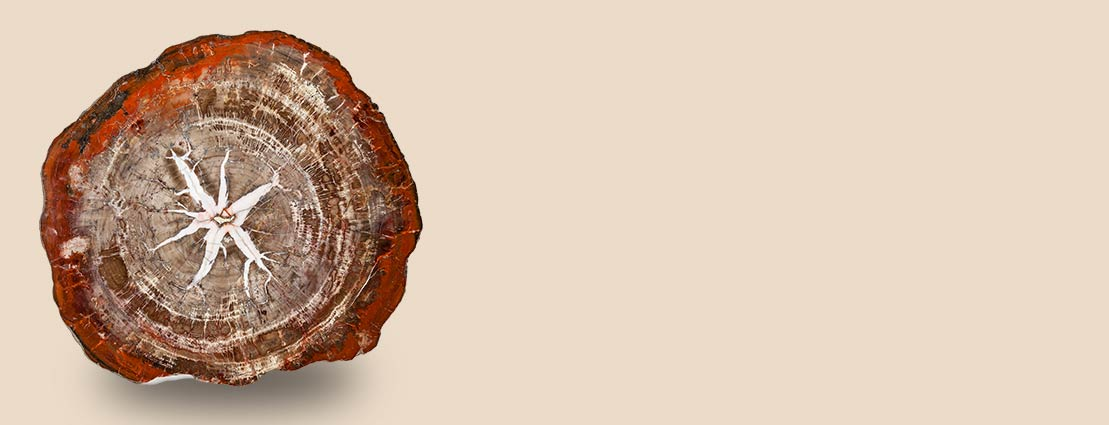 The Lewis Goodman Collection of Petrified Wood