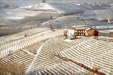 In 1881, Giuseppe Mascarello, a vine-tender in the Italian Monforte d'Alba village, purchased a modest plot of land known as Regione Pian della Polvere to start his own vineyard. This was Giuseppe Mascarello's dream and the vineyard became the...