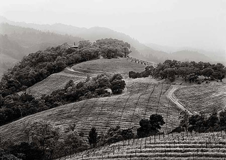 Harlan estate is located in the beautiful Napa Valley of California. Bill Harlan started the Harlan estate in 1984. It has 36 acres of vineyards currently, though it started with only 6 acres. The planted grape blends are 70% Cabernet Sauvignon, 20%...